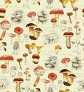 Hand-drawn watercolor seamless pattern of the different mushrooms