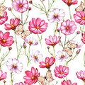 Hand-drawn watercolor seamless pattern with pink and white kosmea flowers with butterflies
