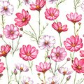 Hand-drawn watercolor seamless pattern with pink and white kosmea flowers