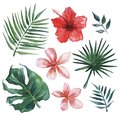 Hand drawn watercolor set of tropical leaves and flowers.