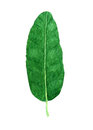 Hand drawn watercolor tropical banana leaf
