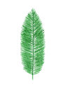 Hand drawn watercolor tropical palm leaf isolated on the white background Royalty Free Stock Photo