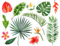 stock image of  Hand drawn watercolor tropical plants