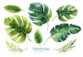 Hand drawn watercolor tropical plants set. Exotic palm leaves, j Royalty Free Stock Photo