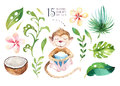 Hand drawn watercolor tropical plants set and monkey. Exotic palm leaves, jungle tree, brazil tropic botany elements and