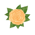 Hand drawn watercolor yellow rose with leaves on the white backg