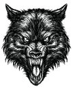 Hand drawn wolf linework vector of Stock Photos