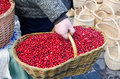Hand farmer wick basket mossberry market ecologic hold wicker full of cranberry sell in outdoor spring fair handmade craft Royalty Free Stock Photos