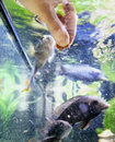 Hand feeding fish human in a water tank close up shot with blurred motion Stock Photography
