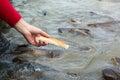 Hand feeding man hungry fish Stock Photos