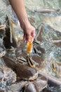 Hand feeding man hungry fish Royalty Free Stock Photo