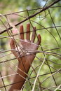 Hand on a fence Royalty Free Stock Photo