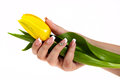 Hand with french manicure holding a tulip