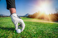 Hand with a glove is placing a golf ball on the ground. Royalty Free Stock Photo