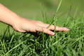 Hand on grass close up of a child touching conservation concept horizontal Stock Photography