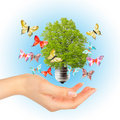 Hand and green tree in light bulb Royalty Free Stock Photo
