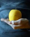 Hand holding apple Royalty Free Stock Photo