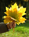 Hand holding autumn leaves Royalty Free Stock Images