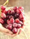 Hand holding a bunch of red grapes selective focus Royalty Free Stock Photos