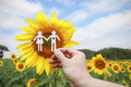 Hand holding couple made from paper over sunflower filed Royalty Free Stock Photo