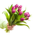 Hand holding flowers Royalty Free Stock Images