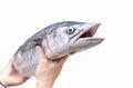 Hand holding Fresh king mackerel fish Royalty Free Stock Photo
