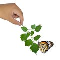 Hand holding green plant with bug on leaf Royalty Free Stock Photography