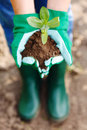 Hand holding plant gardener s in gloves in earth Royalty Free Stock Image