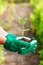 Hand holding plant gardeners in gloves in earth Royalty Free Stock Photo