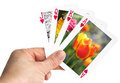 Hand holding playing card showing tulip in spring Stock Photography
