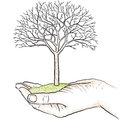 Hand holding a tree Royalty Free Stock Photos
