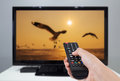 Hand holding TV remote control with a television and bird screen Royalty Free Stock Photo