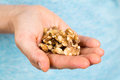 Hand holding walnuts a heap of organic Royalty Free Stock Image