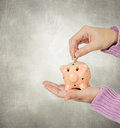 Hand inserting a coin in a piggy bank on gray background Royalty Free Stock Images