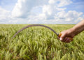 Hand keep sickle over wheat field. Royalty Free Stock Image