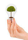 Hand with lamp and tree isolated on white background Stock Images