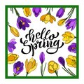 Hand lettering Hello Spring with crocuses. Illustration in hand drawn style.