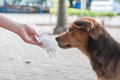 Hand letting poor dog Royalty Free Stock Image