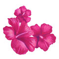 Hand painted oil pastel drawing of pink hibiscus flower Royalty Free Stock Photo