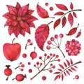 Hand painted red branches, fruit, flower, plants and berries isolated on white background
