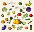 Hand painted vegetables fruits vector illustration of a set of Stock Photo
