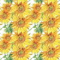 Sunflowers. Hand painted watercolor illustration. Seamless pattern with flowers.