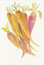 Hand painted watercolor carrots Royalty Free Stock Photo