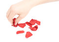 Hand picking red rose petals Royalty Free Stock Photo