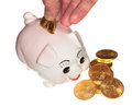 Hand placing gold coin into piggy bank Royalty Free Stock Image