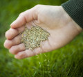 Hand planting grass seeds seed for overseeding green lawn care Royalty Free Stock Photo