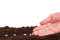 Hand planting seeds Royalty Free Stock Photo