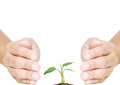 Hand protecting plant isolated for eco system Stock Photos