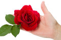 Hand with red rose Stock Image