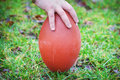 Hand on rugby ball green grass background Royalty Free Stock Photography